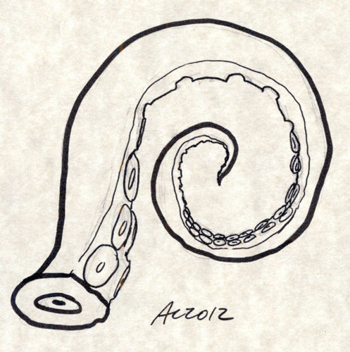 Tentacle sketch by Amy Crook
