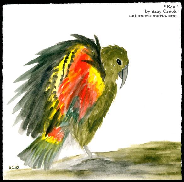Kea, watercolor by Amy Crook