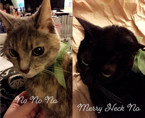 kitties do not like the holidays
