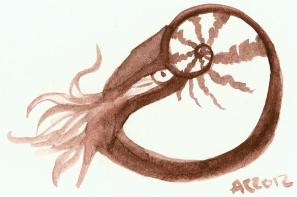 Nautilus sketch by Amy Crook