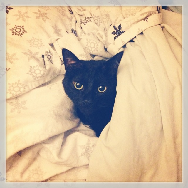 black cat snuggled up in snowflake print bedsheets