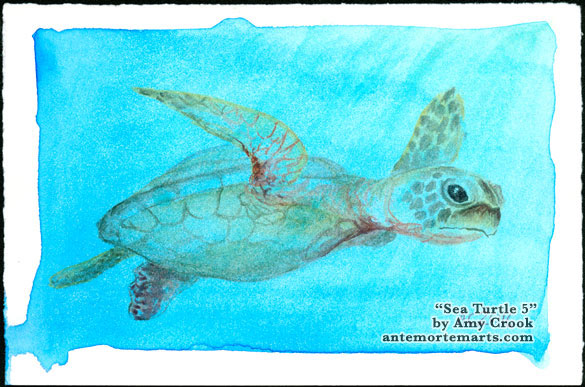Sea Turtle 5 by Amy Crook