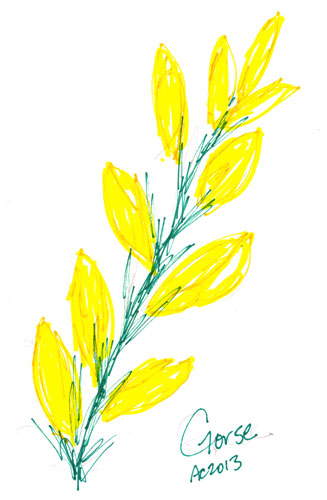 Sharpie Gorse Blossoms by Amy Crook