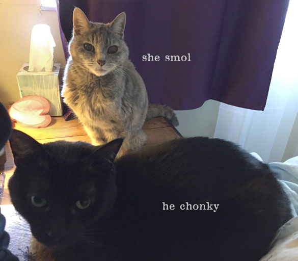 she smol. he chonky. photo of two kitties of varying size.