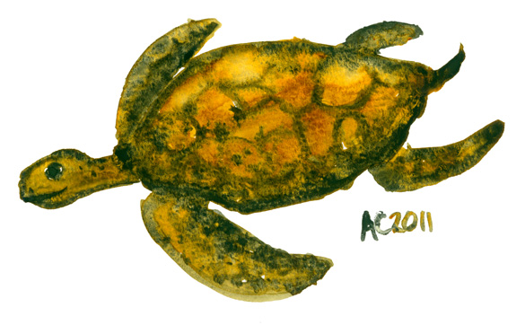 Squamous Turtle, watercolor by Amy Crook