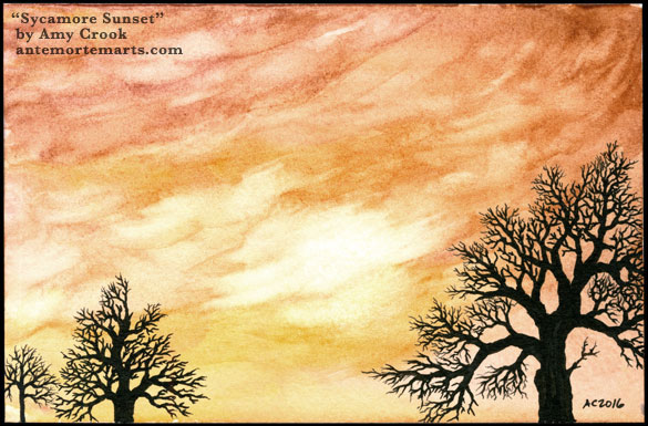 Sycamore Sunset by Amy Crook