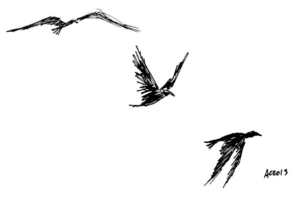 3 Crows sketch by Amy Crook