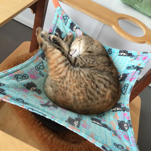 Sleeping kitten at Oakland Cattown Cafe
