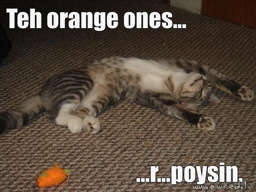 The original, in all its cat meme glory.