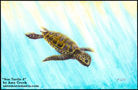 Sea Turtle 4 by Amy Crook