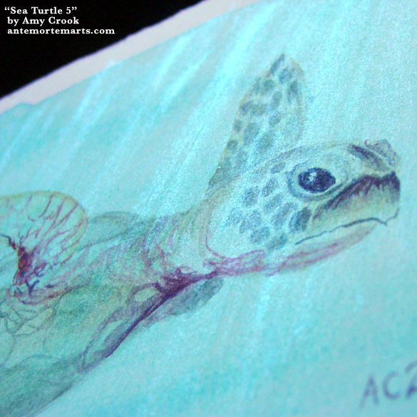 Sea Turtle 5, detail, by Amy Crook