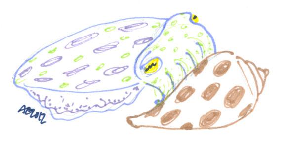Sharpie Bashful Cuttlefish sketch by Amy Crook
