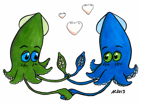 Tying the Knot, squid cartoon by Amy Crook