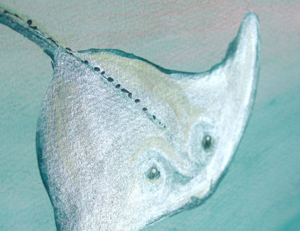 Sunlit Stingray, detail, by Amy Crook