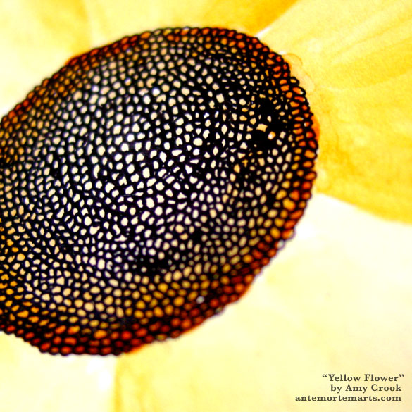 Yellow Flower, detail, by Amy Crook